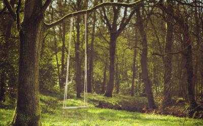 The Swing in the Backyard